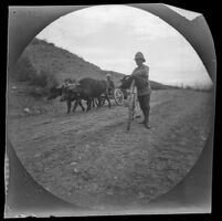 William Sachtleben walking his bicycle alongside an oxcart near Torbali, between Geyve and  Beypazari, Turkey, 1891