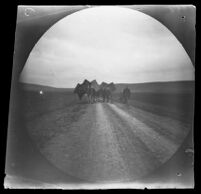 William Sachtleben on bicycle behind a caravan of camels along the road from Geyve to Beypazari, Turkey, 1891
