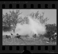 Cloud of tear gas during police raid to capture Jack W. Twinning, Valencia, 1970