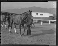 "Race horse ""Discovery"" before Santa Anita Handicap, Arcadia, 1936"