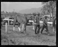 "Race horse ""Discovery"" with his handler at Santa Anita Racetrack, Arcadia, 1936"
