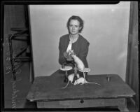 Pomona College student Mildred Ellis conducts experiments with rats, Claremont, 1935