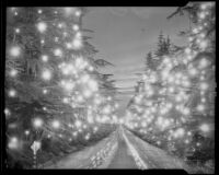 Illuminated trees in Pasadena, 1935