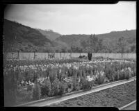 Henry O'Melveny in his garden in Stone Canyon, Los Angeles, 1936