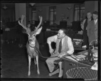 """Chiefie"" the deer and L. A. Times editor Bill Wayne, Los Angeles, 1936"