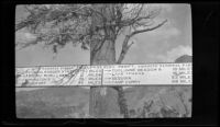 Road sign at the summit of Tioga Pass, Mono and Tuolomne Counties, 1929
