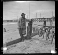 H. H. West standing beside the fish he caught, Newport Beach, 1914