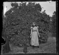 Pearl Smith standing in front of an orange tree, Pomona, about 1895