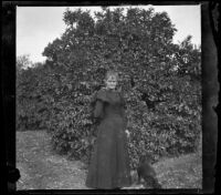 Mrs. Smith posing in front of an orange tree, Pomona, about 1895