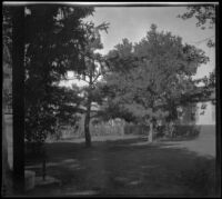 Yard with trees and water spigot on the West family's former property, Red Oak, 1900