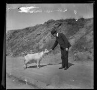 Man feeding a goat, San Francisco, 1900
