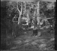 Mary A. West, Dave F. Smith and Nella A. West standing around their campsite among the aspens, June Lake vicinity, 1913