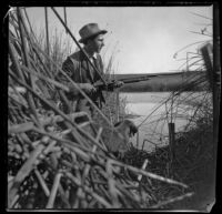 Guy M. West and his dog lurk in the tules while duck hunting, Long Beach vicinity, about 1895