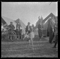 Boys look at a deer in Agricultural Park, Los Angeles, 1900