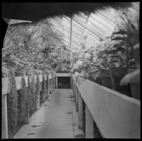 Greenhouse in Lincoln (Eastlake) Park, Los Angeles, about 1900