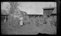 Mertie West picking raspberries in W. L. Kinsell's yard, Anchorage, 1946