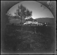 Boys and young men peeking over a hedge with a house behind them, (Turkey?), 1891