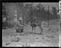 Alfred Alcorn and Goat the deer, Los Angeles, 1936