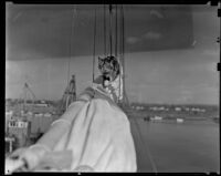 Pandora, the Mildura's cat, walks along the main mast, Newport Beach, 1938-1939