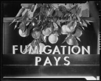 "Photograph for ""Sunjius"" with the message ""Fumigation Pays"""