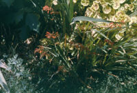 United States - Plants, 1960-1968