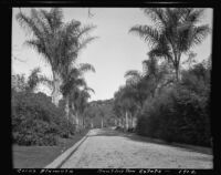 Cocos palm at the estate of Henry E. Huntington (later Huntington Botanical Gardens), San Marino, 1912