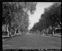 Schinus molle (Peruvian pepper) trees lining Oakland Avenue, Pasadena, 1913