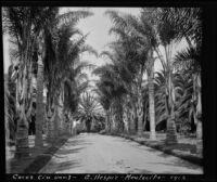 Road lined by palm trees at the James Waldron Gillespie residence (El Fureidis), Montecito, 1912