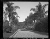 Cocos palms at the estate of Henry E. Huntington (later Huntington Botanical Gardens), San Marino, 1912