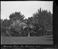 Lawn and group of palm trees at Alameda Park, Santa Barbara, 1912