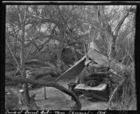 Desert campsite of Ralph D. Cornell, Thermal, 1910