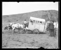 Bystanding men watch two oxen strain to pull a cart across a dirt field.